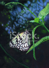 Paper Kite Butterfly Painting