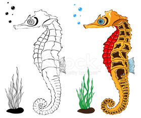 Sea Horse Coloring Pages Stock Photos Vectorhqcom