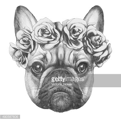 Portrait of French Bulldog with roses.