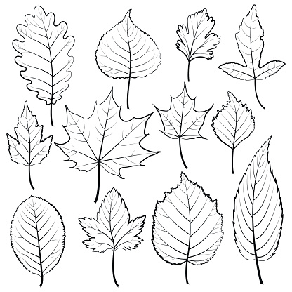 Set of twelve black and white leaves on a white background.