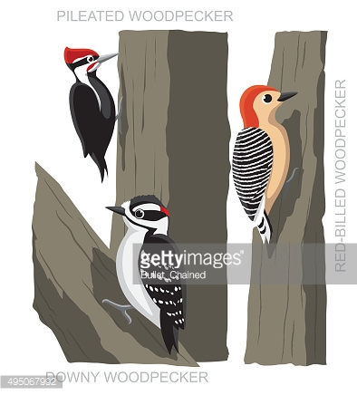 Bird Woodpecker Set Cartoon Vector Illustration
