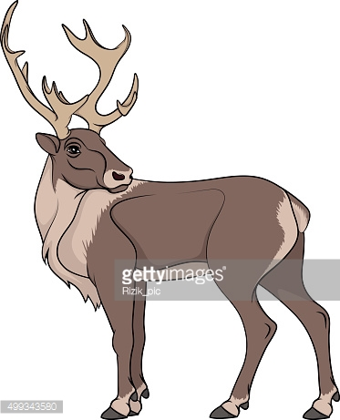 Deer illustration. Isolated object on white background