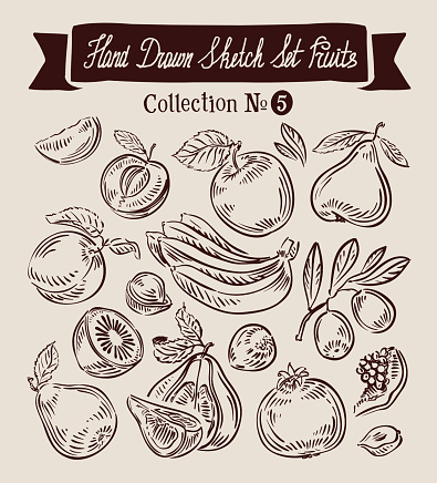 Hand drawn vector sketch collection fruit
