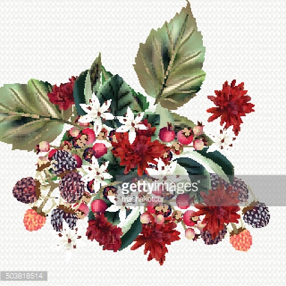 Floral vector background with chrysanthemums flowers and berries
