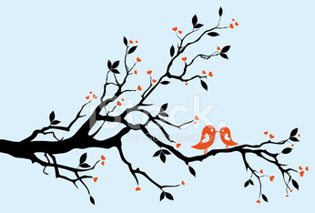 birds kissing on a branch