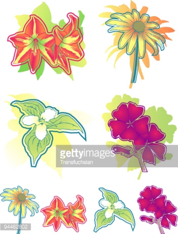 Group of four stylized flower illustrations