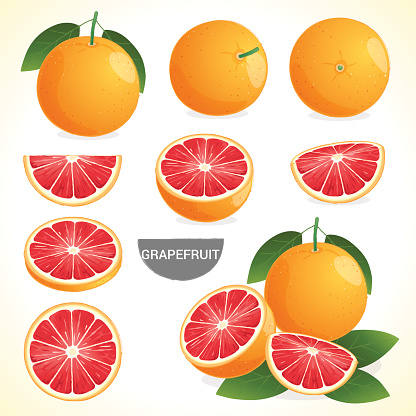 Set of grapefruit with leaf in various styles vector format