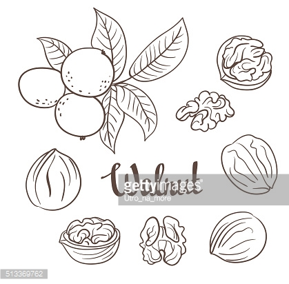 Walnuts with leaves and walnuts isolated on a white background