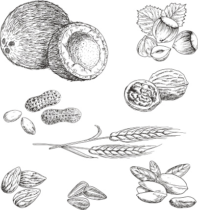 Nuts, seeds, beans and wheat sketches