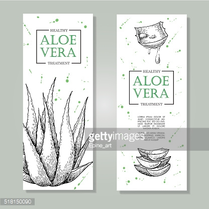 Vector aloe vera hand drawn illustrations. Aloe Vera banner, pos