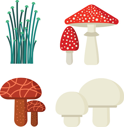 Mushrooms vector illustration set different types isolated on white background