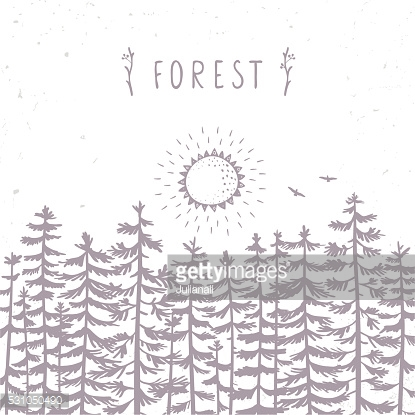 forest beautiful silhouette