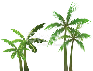 Palm trees - VECTOR