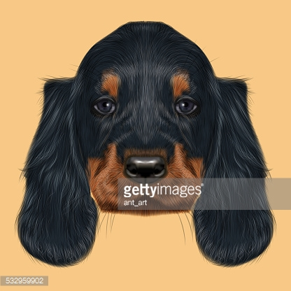 Illustrated Portrait of Gordon Setter dog.