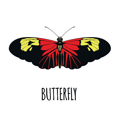 Realistic butterfly in flat style.