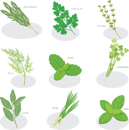 collection of fresh herbs isolated
