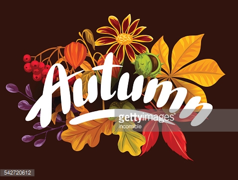 Card with autumn leaves and plants. Design for advertising booklets