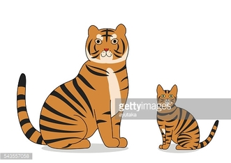 tiger and toyger cat