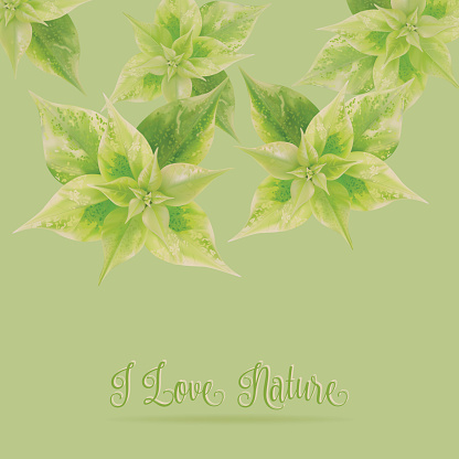 Green leaf on green background,love nature concept