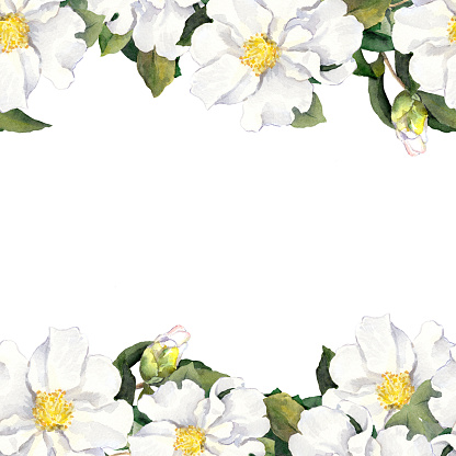 Seamless floral stripe frame with white flowers. Watercolor banner