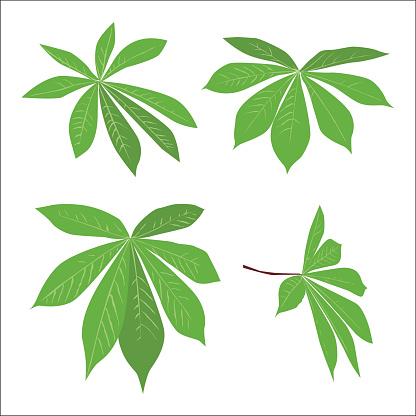 set of green tropical leaves design. collection of eco plants. vector