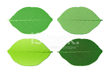 Four isolated leafs