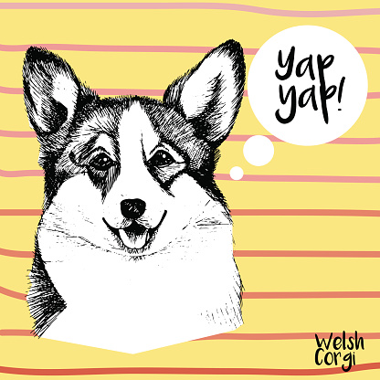 Vector close up portrait of welsh corgi pembroke .