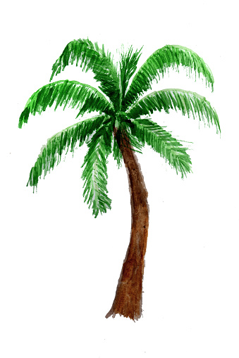 Palm tree in watercolor.