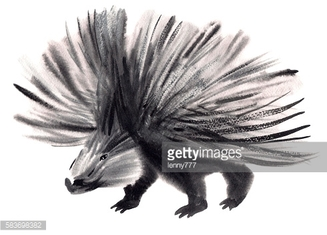 Watercolor illustration of a porcupine in white background