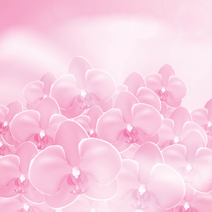 Pink flower orchid background