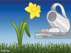 Watering Can,Nature,Botany,...