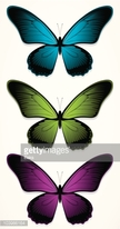 Image,Flying,Insect,Butterf...