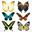 Butterfly - Insect,Wing,Spr...