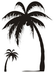 Palm Tree,Silhouette,Tree,C...