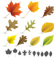 Leaf,Autumn,Maple Leaf,Oak ...