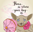 Domestic Animals,Concepts &...