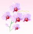 Orchid,Tropical Flower,Purp...