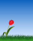 Tulip,Grass,Single Flower,S...