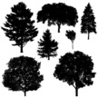 Hardwood Tree,Ash Tree,White Background,Black Color,Thin,Part of a Series,Beech Tree,Large Group Of Objects,Cut Out,Vector,Leaf,Plant,Silhouette,Lush Foliage,Summer,Computer Graphic,Maple Tree,Group Of Objects,Oak Tree,Bonsai Tree,Winter,Evergreen Tree,Digitally Generated Image,Bush,Branch - Plant Part,Illustration,Poplar Tree,Beauty In Nature,Beauty,Clip Art,Black And White,Collection,Deciduous Tree,Back Lit,Birch Tree,Slim,Tree,Variation,No People,Tree Trunk,Small