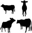 Cow,Silhouette,Cattle,Outli...