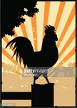 Crowing,Dawn,Rooster,Animal...