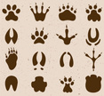 Footprint,Paw,Mud,Claw,Trac...