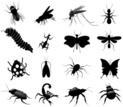 Insect,Fly,Mosquito,Caterpi...