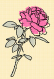 Rose - Flower,Old-fashioned...
