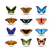 Butterfly - Insect,Insect,V...