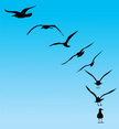 Seagull,Silhouette,Flying,B...