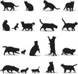 Domestic Cat,Silhouette,Bac...