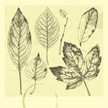 Leaf,Tree,Etching,Sketch,Dr...