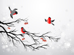 Bird,Branch,Winter,Berry,Ch...
