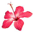 Hibiscus,Single Flower,Flow...